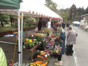 木花の花生産者販売